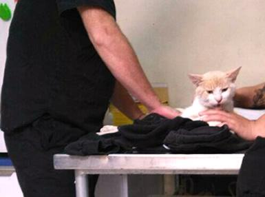 Gatito baleado siendo atendido.